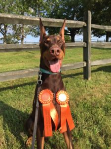 River Earns Lure Coursing Legs